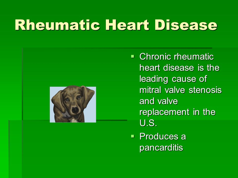 Rheumatic Heart Disease Chronic rheumatic heart disease is the leading cause of mitral valve stenosis and valve replacement in the U.S. Chronic rheuma
