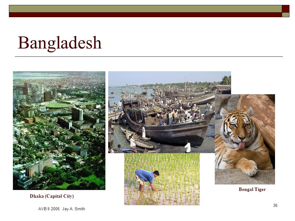 AVB II 2006 Jay A. Smith 36 Cox Bazar Bangladesh Dhaka (Capital City) Bengal Tiger