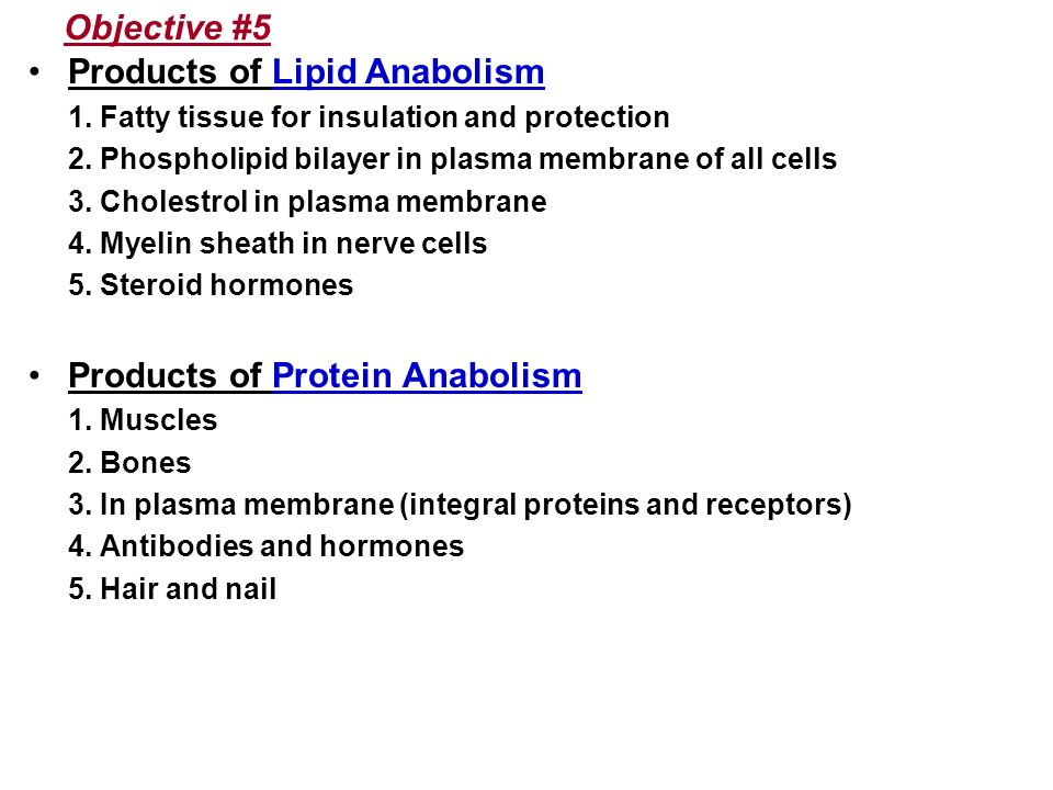 Objective #5 Products of Lipid Anabolism 1. Fatty tissue for insulation and protection 2. Phospholipid bilayer in plasma membrane of all cells 3. Chol