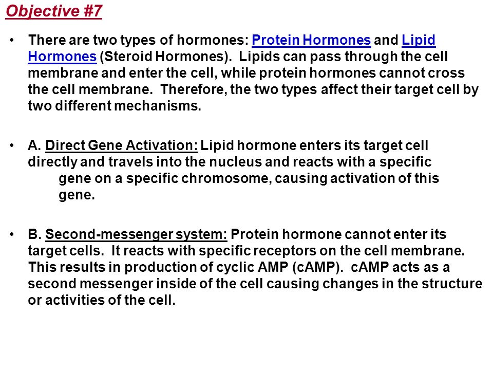 Objective #7 There are two types of hormones: Protein Hormones and Lipid Hormones (Steroid Hormones). Lipids can pass through the cell membrane and en