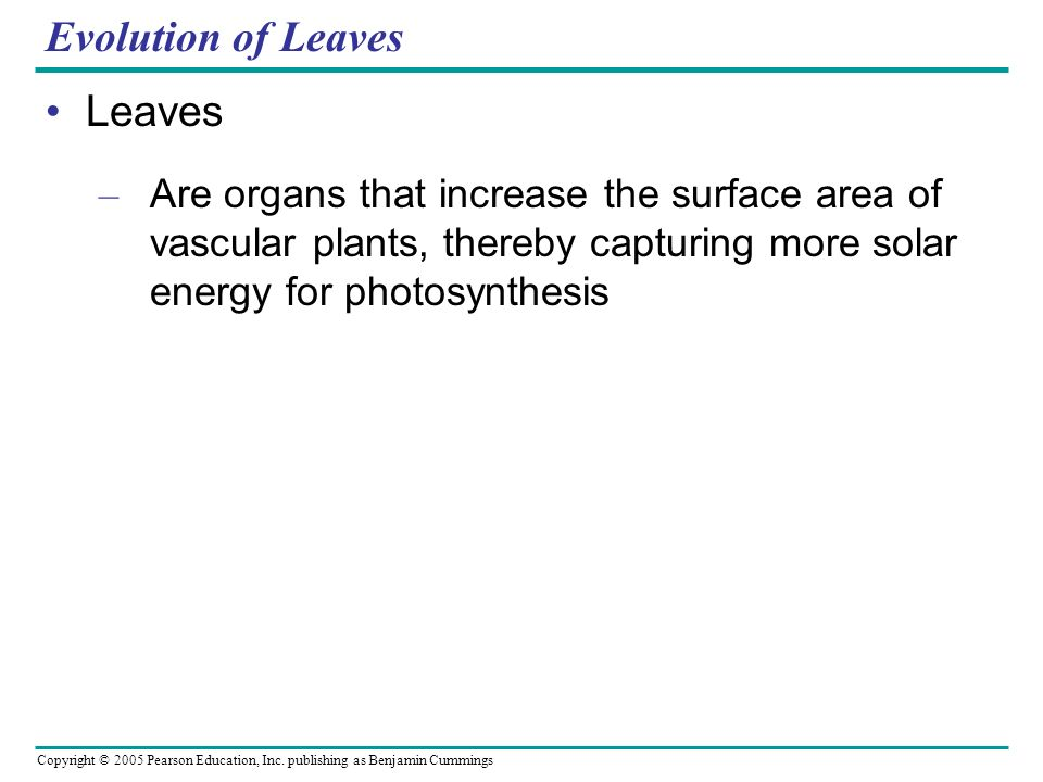 Copyright © 2005 Pearson Education, Inc. publishing as Benjamin Cummings Evolution of Leaves Leaves – Are organs that increase the surface area of vas