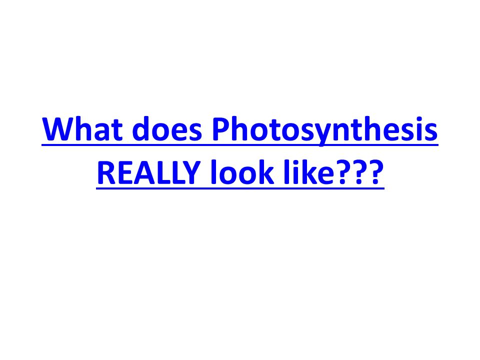 What does Photosynthesis REALLY look like???