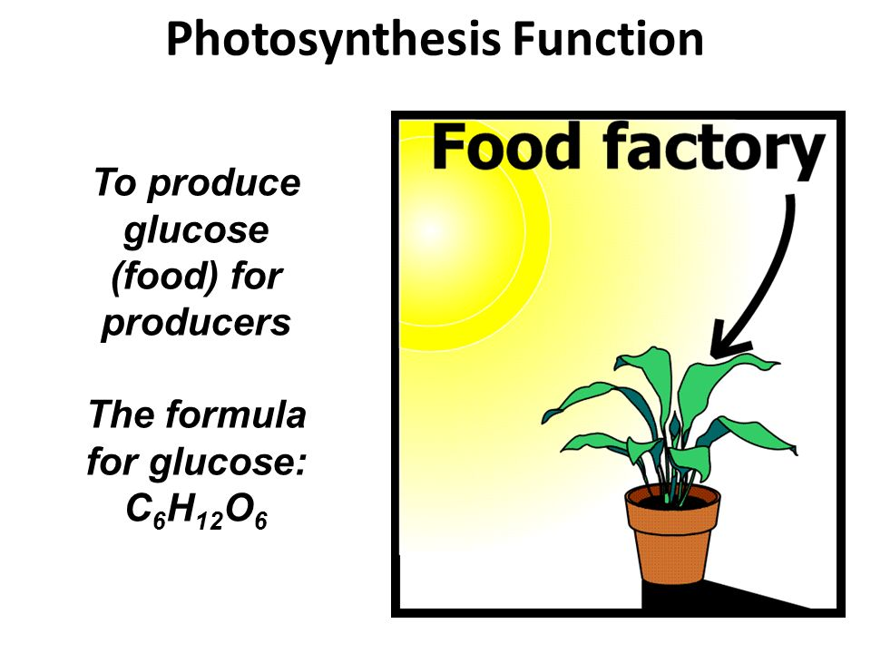 Photosynthesis Function To produce glucose (food) for producers The formula for glucose: C 6 H 12 O 6