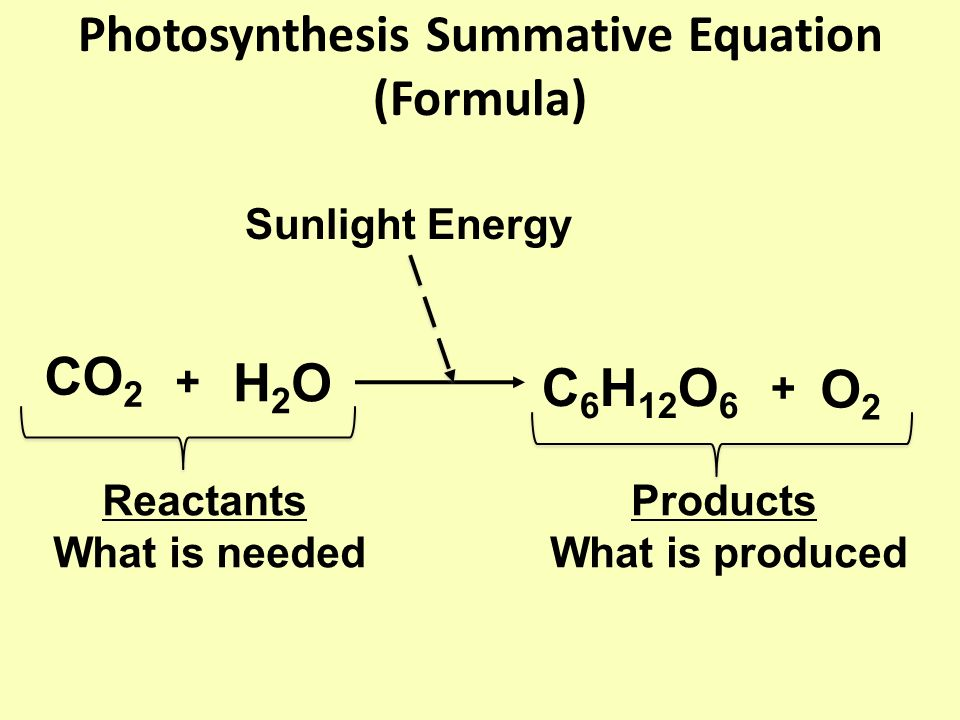 Photosynthesis Summative Equation (Formula) CO 2 H2OH2O + C 6 H 12 O 6 + O2O2 Sunlight Energy Reactants What is needed Products What is produced