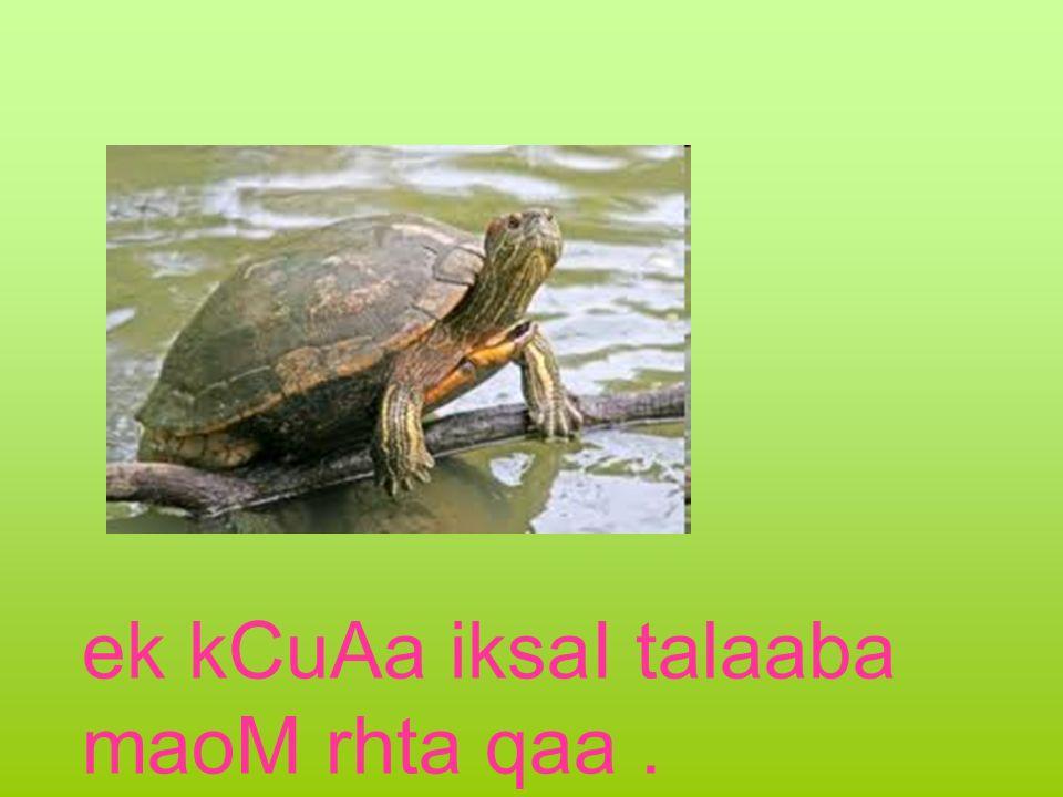 ek kCuAa iksaI talaaba maoM rhta qaa.