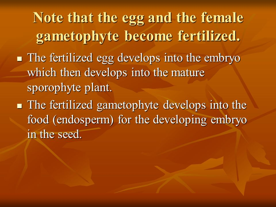 Note that the egg and the female gametophyte become fertilized. The fertilized egg develops into the embryo which then develops into the mature sporop