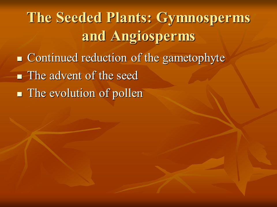 The Seeded Plants: Gymnosperms and Angiosperms Continued reduction of the gametophyte Continued reduction of the gametophyte The advent of the seed Th