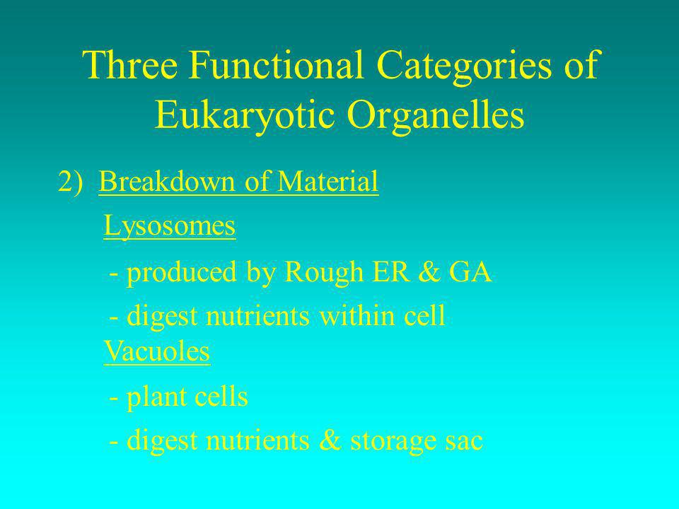 Three Functional Categories of Eukaryotic Organelles 2) Breakdown of Material Lysosomes - produced by Rough ER & GA - digest nutrients within cell Vac