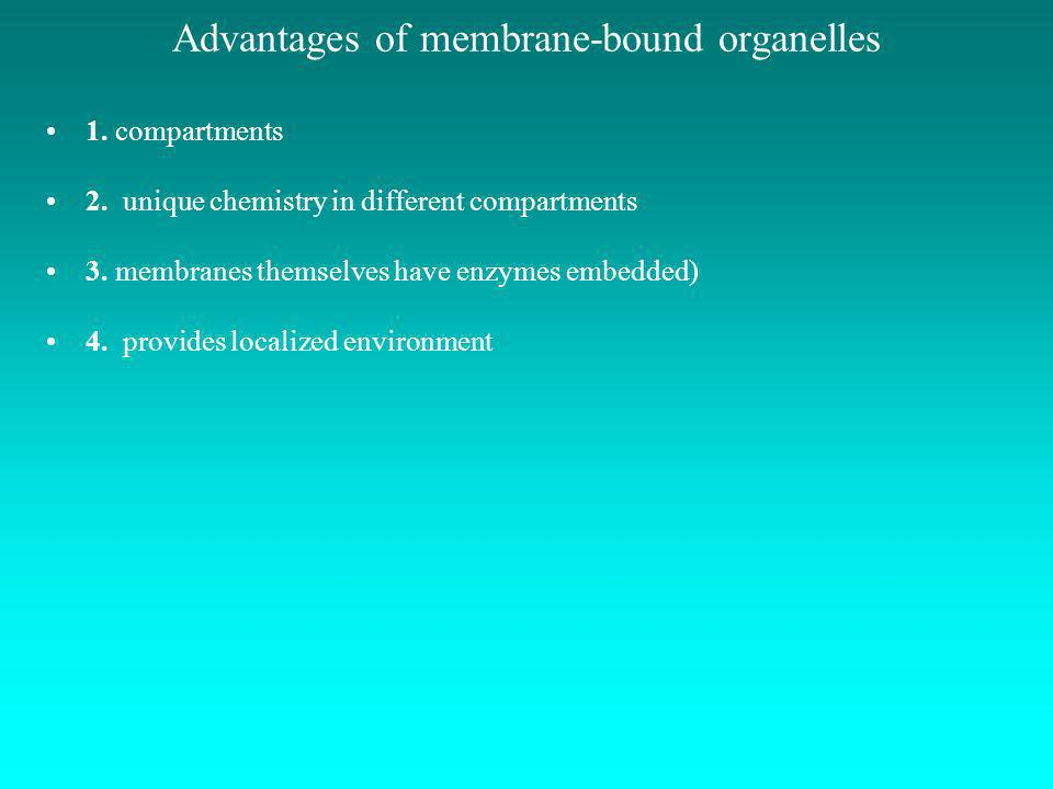 Advantages of membrane-bound organelles 1. compartments 2. unique chemistry in different compartments 3. membranes themselves have enzymes embedded) 4