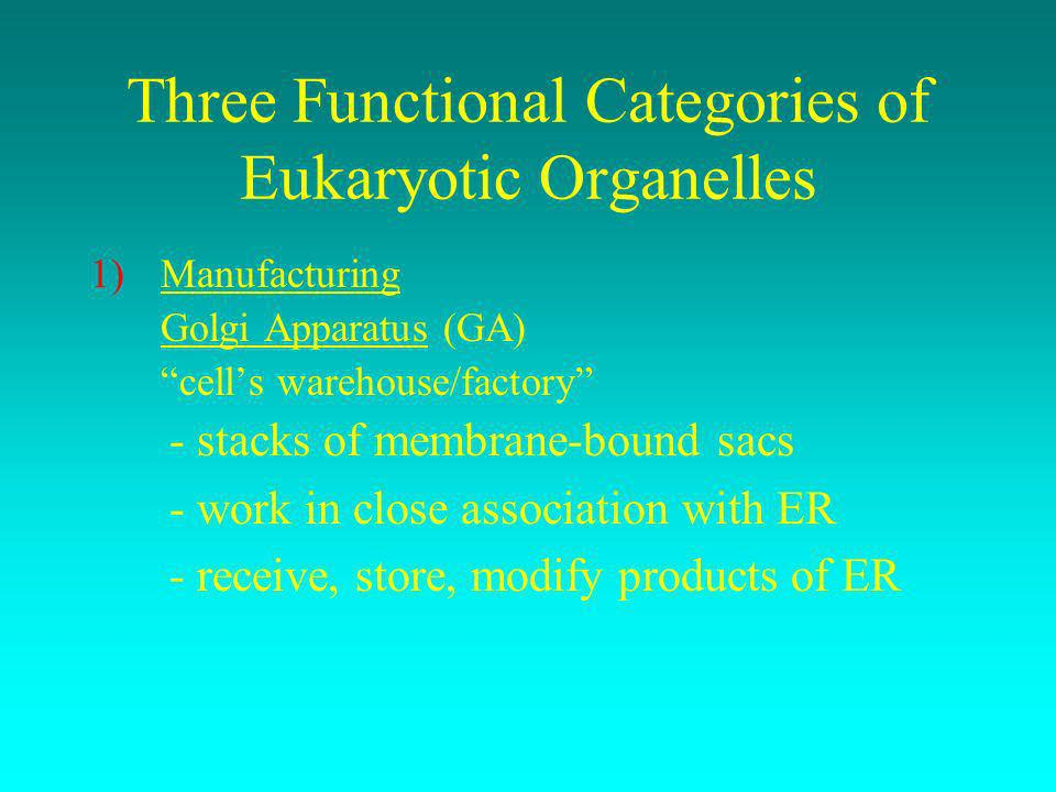Three Functional Categories of Eukaryotic Organelles 1)Manufacturing Golgi Apparatus (GA) cells warehouse/factory - stacks of membrane-bound sacs - wo
