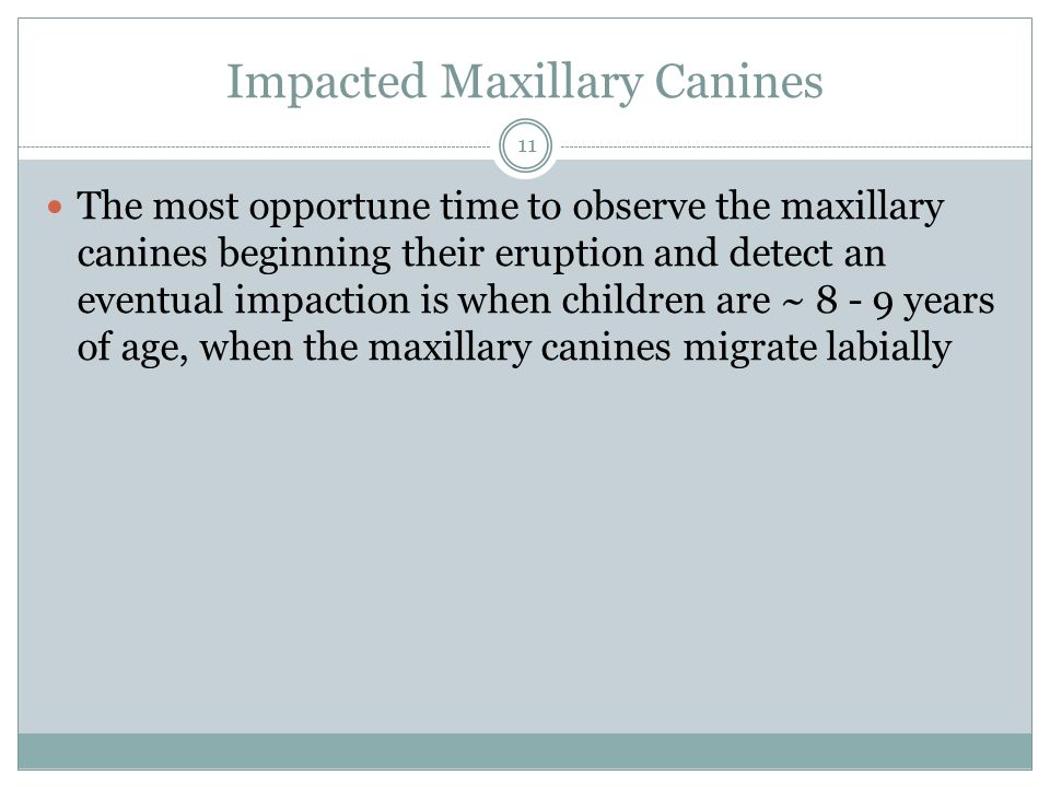 Impacted Maxillary Canines The most opportune time to observe the maxillary canines beginning their eruption and detect an eventual impaction is when