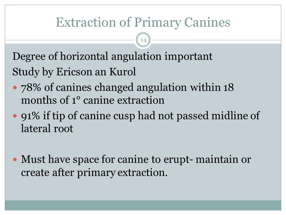 Extraction of Primary Canines Degree of horizontal angulation important Study by Ericson an Kurol 78% of canines changed angulation within 18 months o