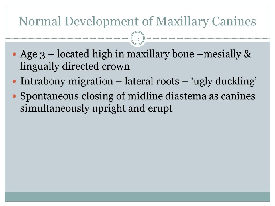 Normal Development of Maxillary Canines Age 3 – located high in maxillary bone –mesially & lingually directed crown Intrabony migration – lateral root