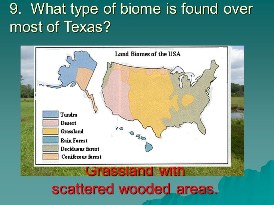 9. What type of biome is found over most of Texas? Answer Grassland with scattered wooded areas.