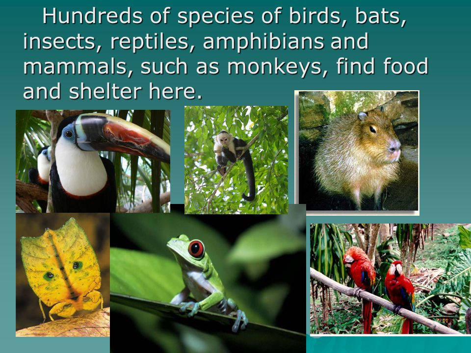 Hundreds of species of birds, bats, insects, reptiles, amphibians and mammals, such as monkeys, find food and shelter here. Hundreds of species of bir