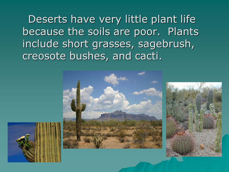 Deserts have very little plant life because the soils are poor. Plants include short grasses, sagebrush, creosote bushes, and cacti. Deserts have very
