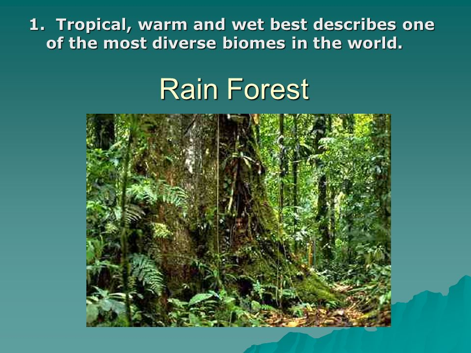 Rain Forest 1. Tropical, warm and wet best describes one of the most diverse biomes in the world.