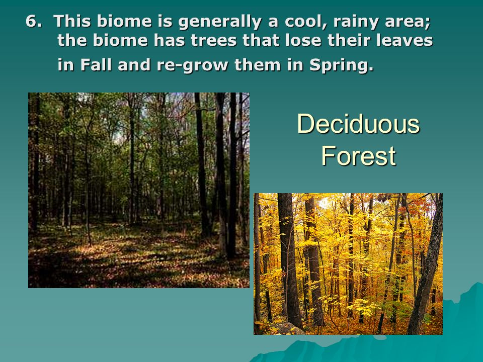 Deciduous Forest 6. This biome is generally a cool, rainy area; the biome has trees that lose their leaves in Fall and re-grow them in Spring.
