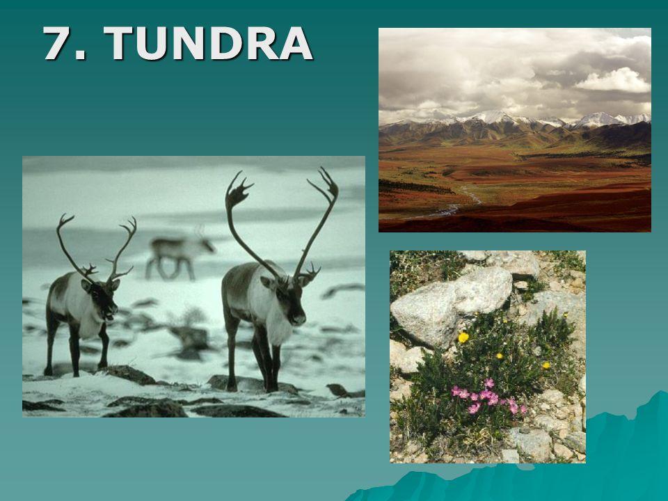 7. TUNDRA