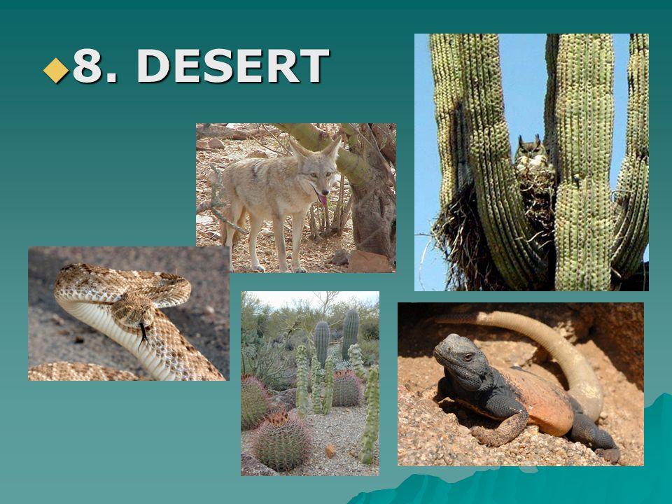 8. DESERT 8. DESERT