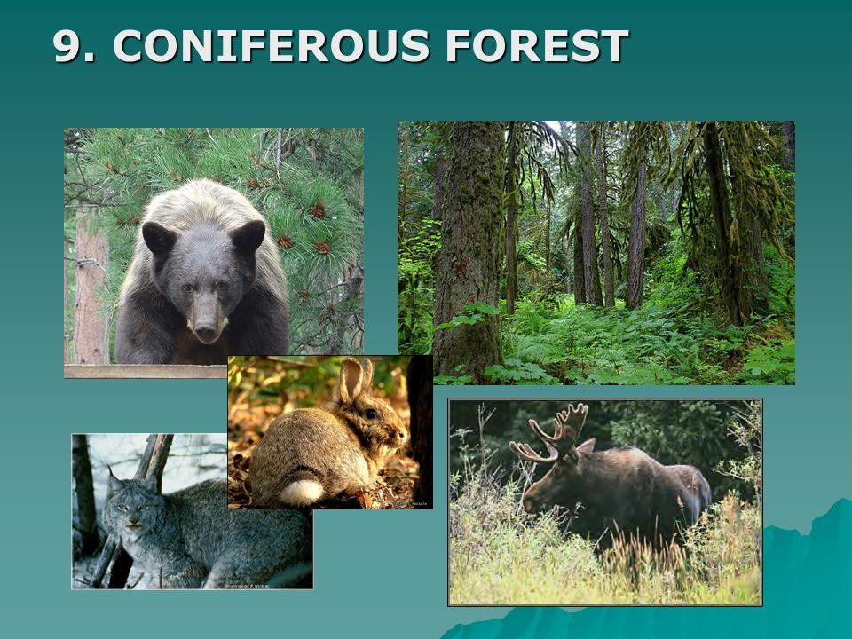 9. CONIFEROUS FOREST