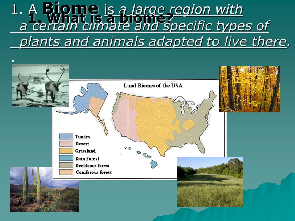 1. A Biome is a large region with a certain climate and specific types of a certain climate and specific types of plants and animals adapted to live t