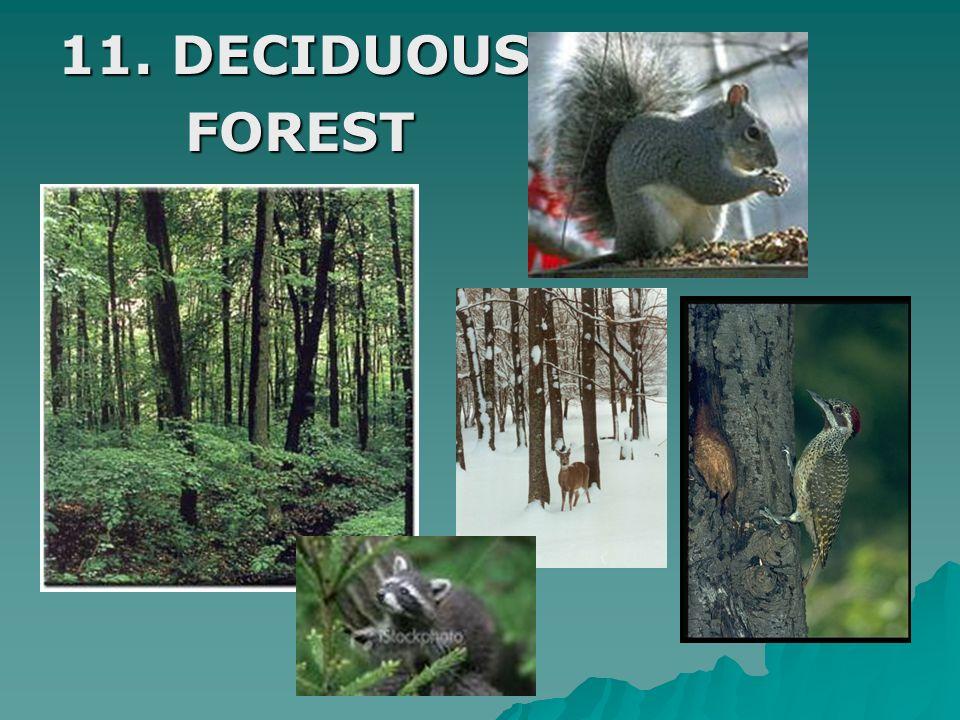 11. DECIDUOUS FOREST FOREST