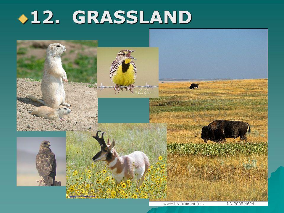 12. GRASSLAND 12. GRASSLAND