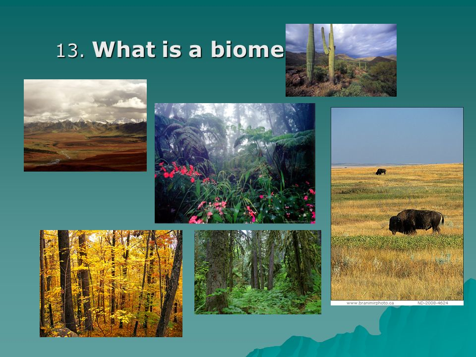 13. What is a biome? 13. What is a biome?