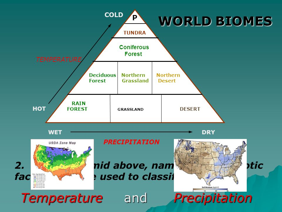 WORLD BIOMES TUNDRA Coniferous Forest Deciduous Northern Northern Forest Grassland Desert RAIN FOREST GRASSLAND DESERT WETDRY PRECIPITATION HOT COLD P