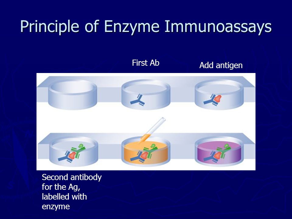 Principle of Enzyme Immunoassays First Ab Add antigen Second antibody for the Ag, labelled with enzyme
