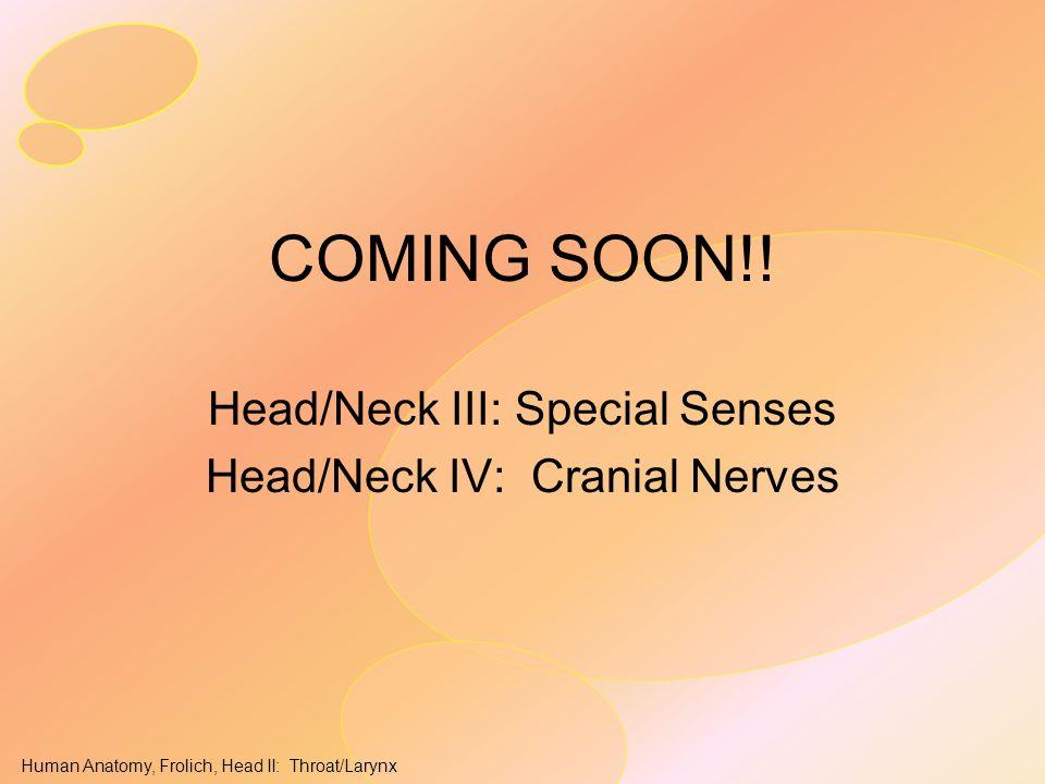 Human Anatomy, Frolich, Head II: Throat/Larynx COMING SOON!! Head/Neck III: Special Senses Head/Neck IV: Cranial Nerves