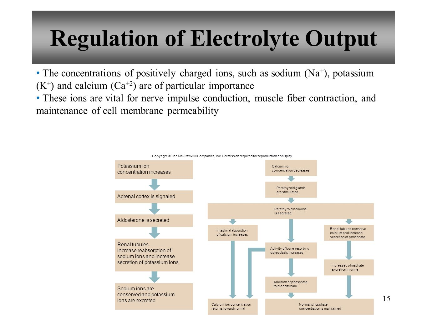 15 Regulation of Electrolyte Output The concentrations of positively charged ions, such as sodium (Na + ), potassium (K + ) and calcium (Ca +2 ) are o