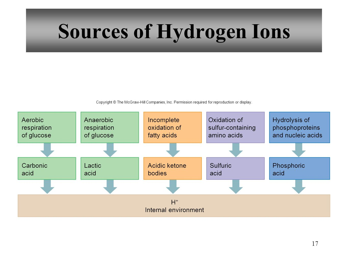 17 Sources of Hydrogen Ions Aerobic respiration of glucose Anaerobic respiration of glucose Incomplete oxidation of fatty acids Oxidation of sulfur-co