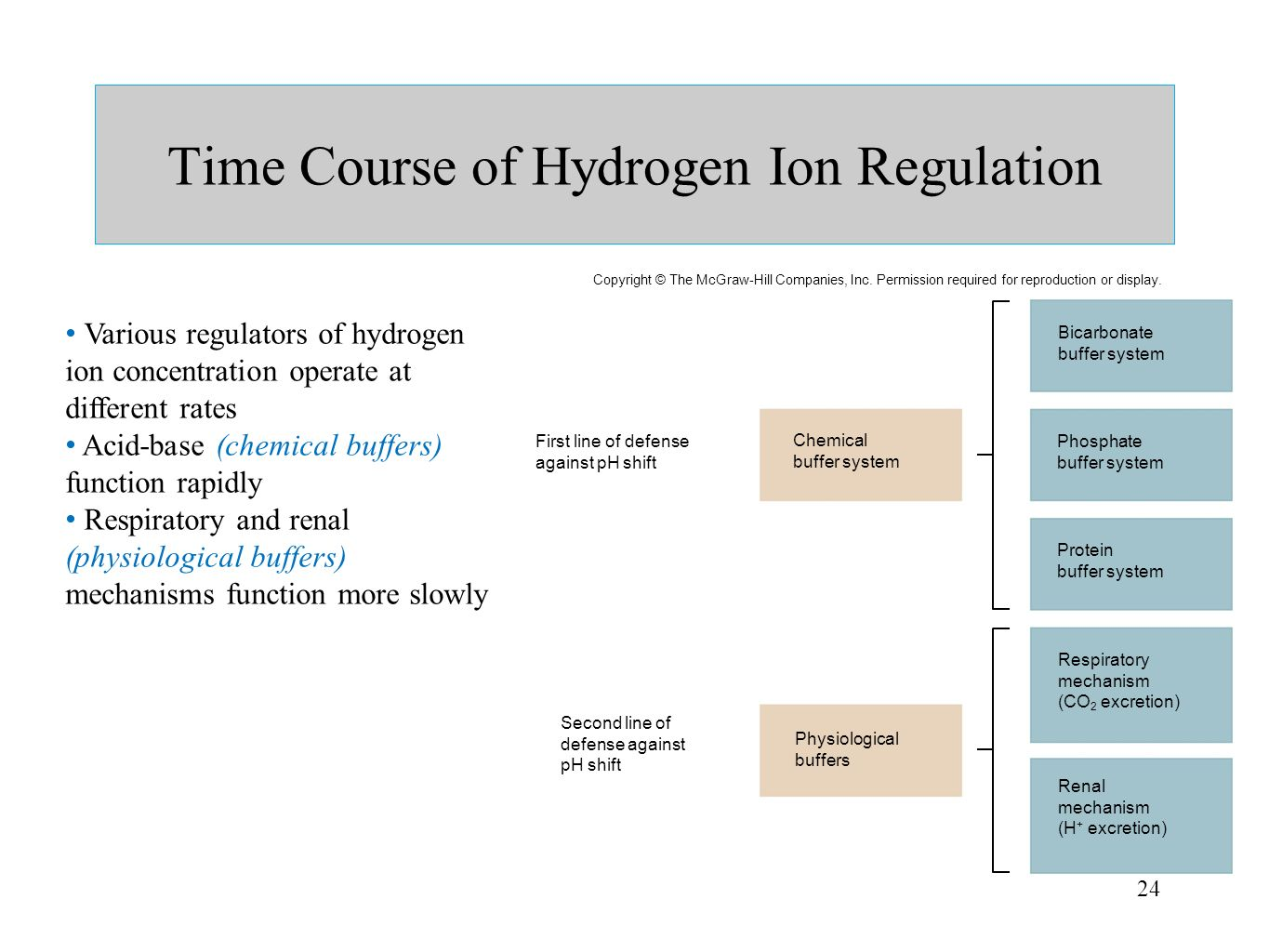 24 Time Course of Hydrogen Ion Regulation Various regulators of hydrogen ion concentration operate at different rates Acid-base (chemical buffers) fun