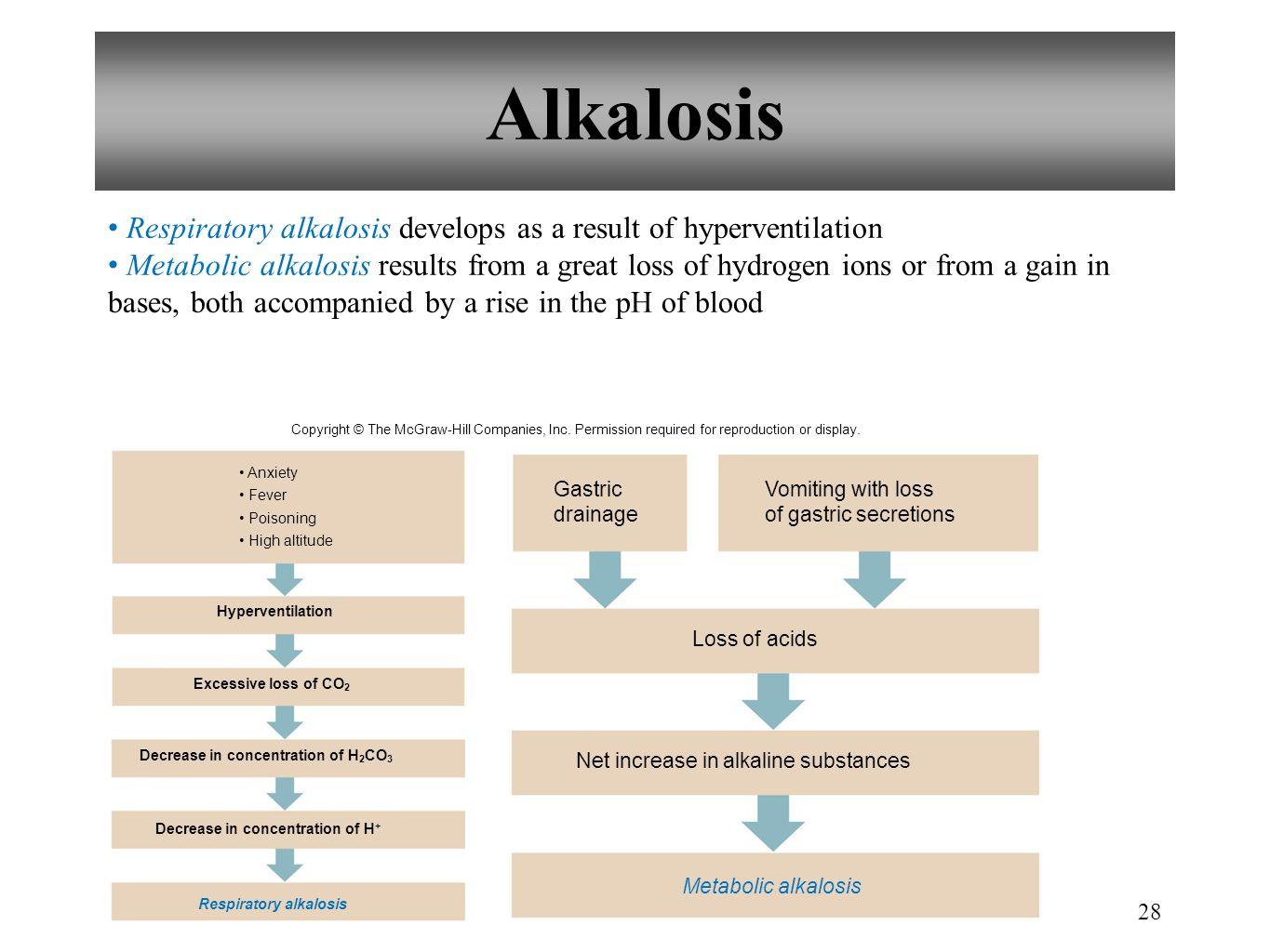 28 Alkalosis Respiratory alkalosis develops as a result of hyperventilation Metabolic alkalosis results from a great loss of hydrogen ions or from a g