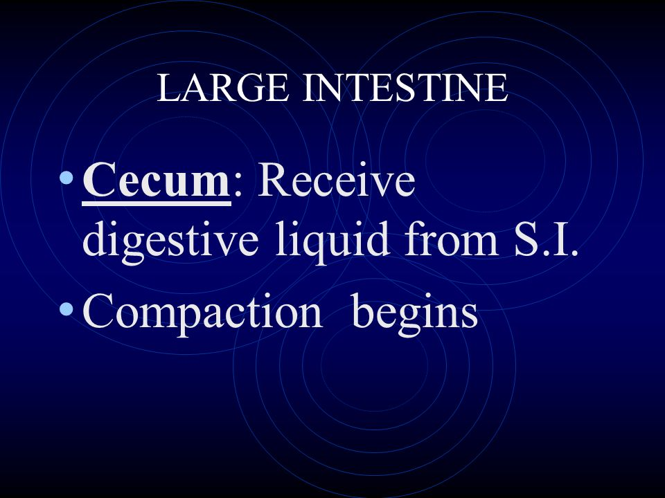 LARGE INTESTINE Cecum: Receive digestive liquid from S.I. Compaction begins