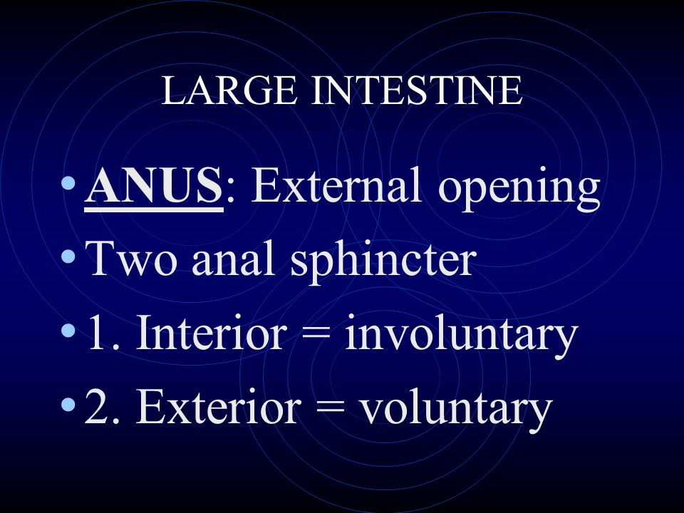 LARGE INTESTINE ANUS: External opening Two anal sphincter 1.