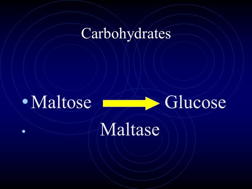 Carbohydrates Maltose Glucose Maltase