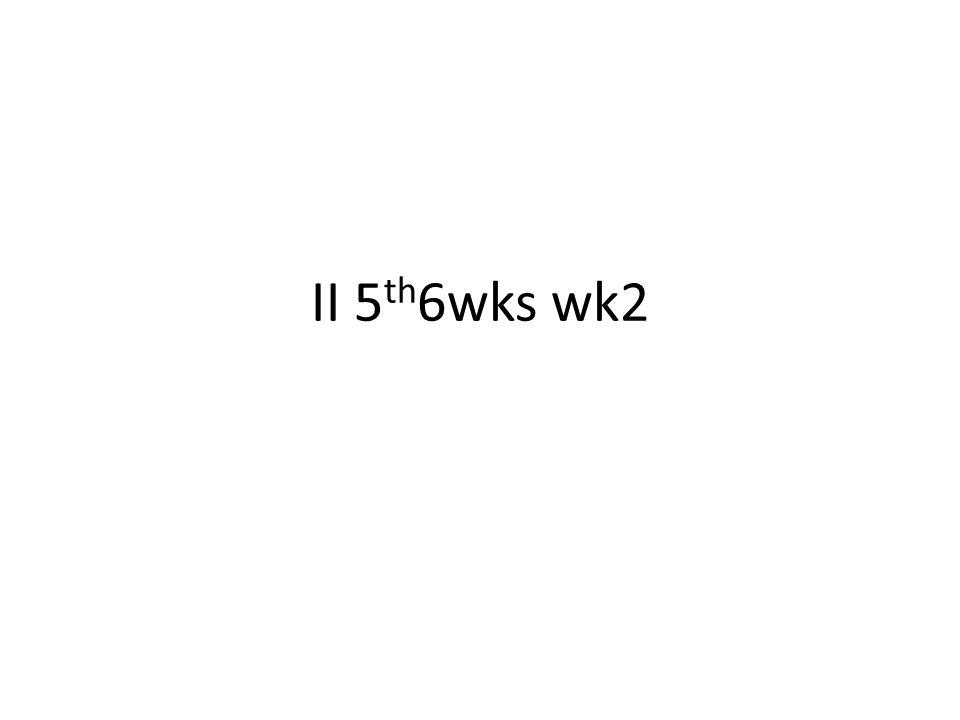 II 5 th 6wks wk2