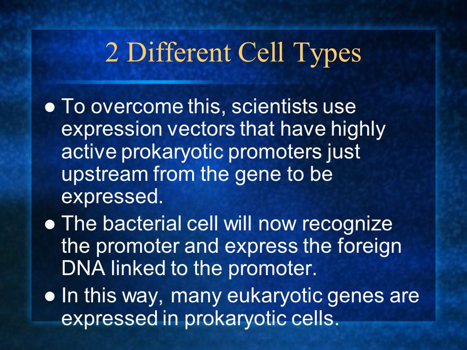 2 Different Cell Types To overcome this, scientists use expression vectors that have highly active prokaryotic promoters just upstream from the gene t