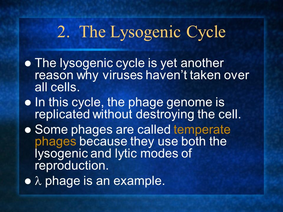 2. The Lysogenic Cycle The lysogenic cycle is yet another reason why viruses havent taken over all cells. In this cycle, the phage genome is replicate