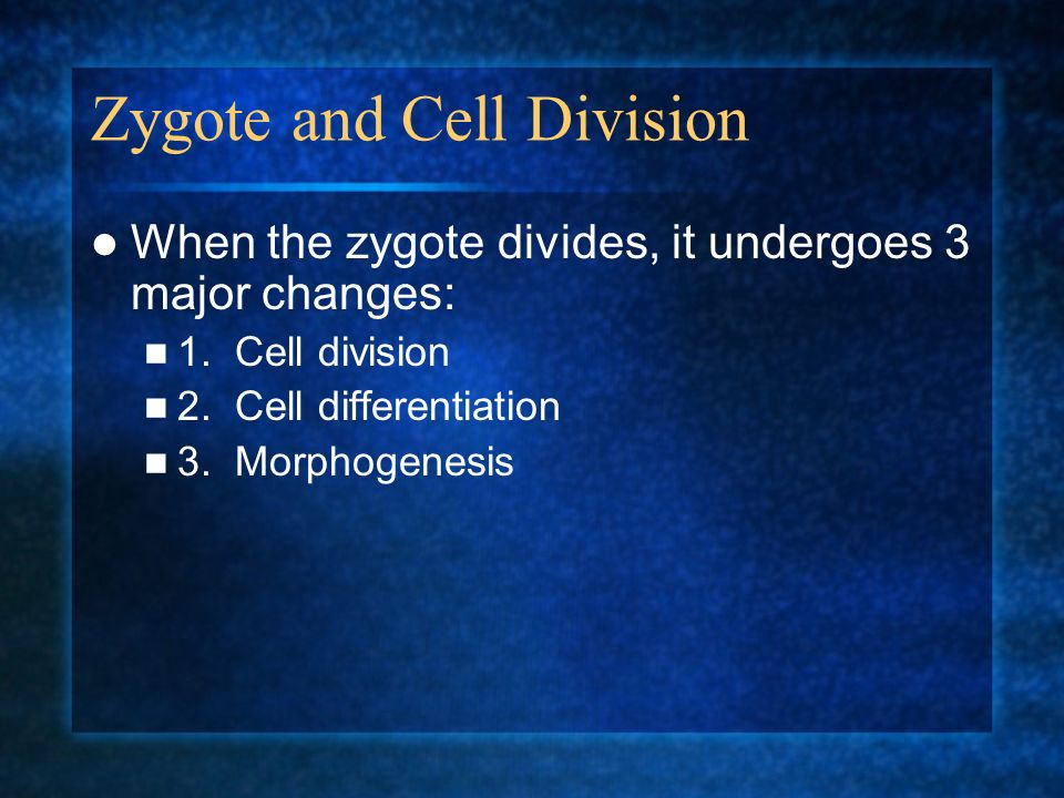 Zygote and Cell Division When the zygote divides, it undergoes 3 major changes: 1. Cell division 2. Cell differentiation 3. Morphogenesis