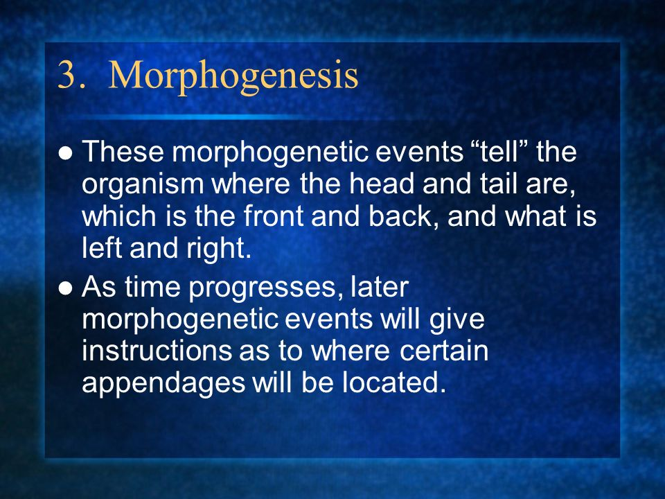 3. Morphogenesis These morphogenetic events tell the organism where the head and tail are, which is the front and back, and what is left and right. As