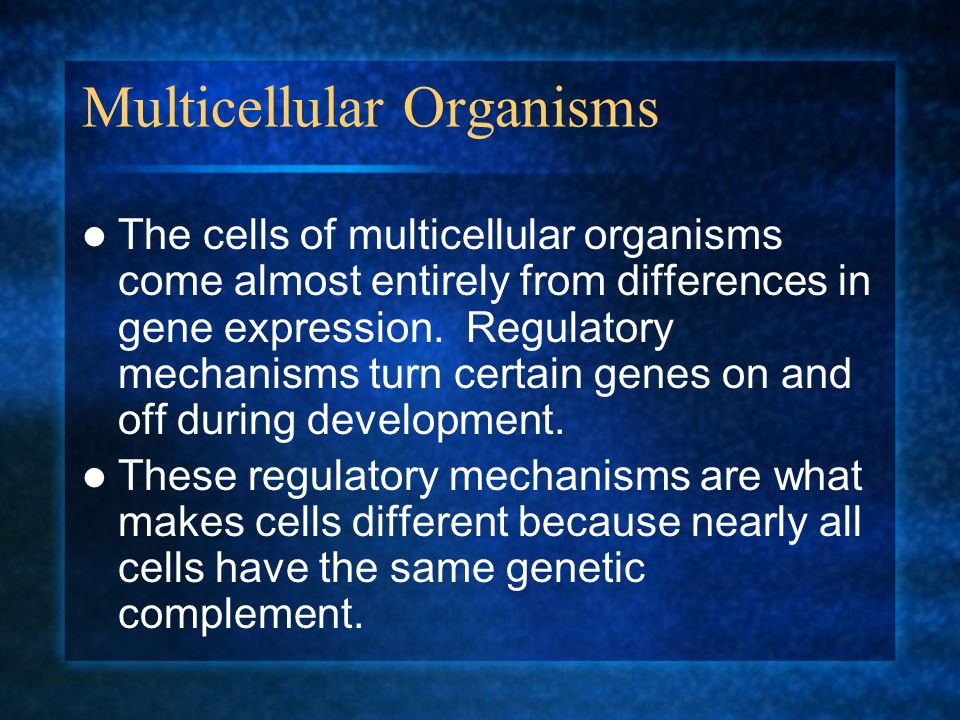 Multicellular Organisms The cells of multicellular organisms come almost entirely from differences in gene expression. Regulatory mechanisms turn cert
