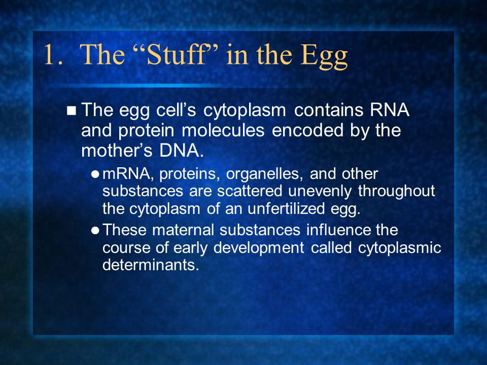 1. The Stuff in the Egg The egg cells cytoplasm contains RNA and protein molecules encoded by the mothers DNA. mRNA, proteins, organelles, and other s