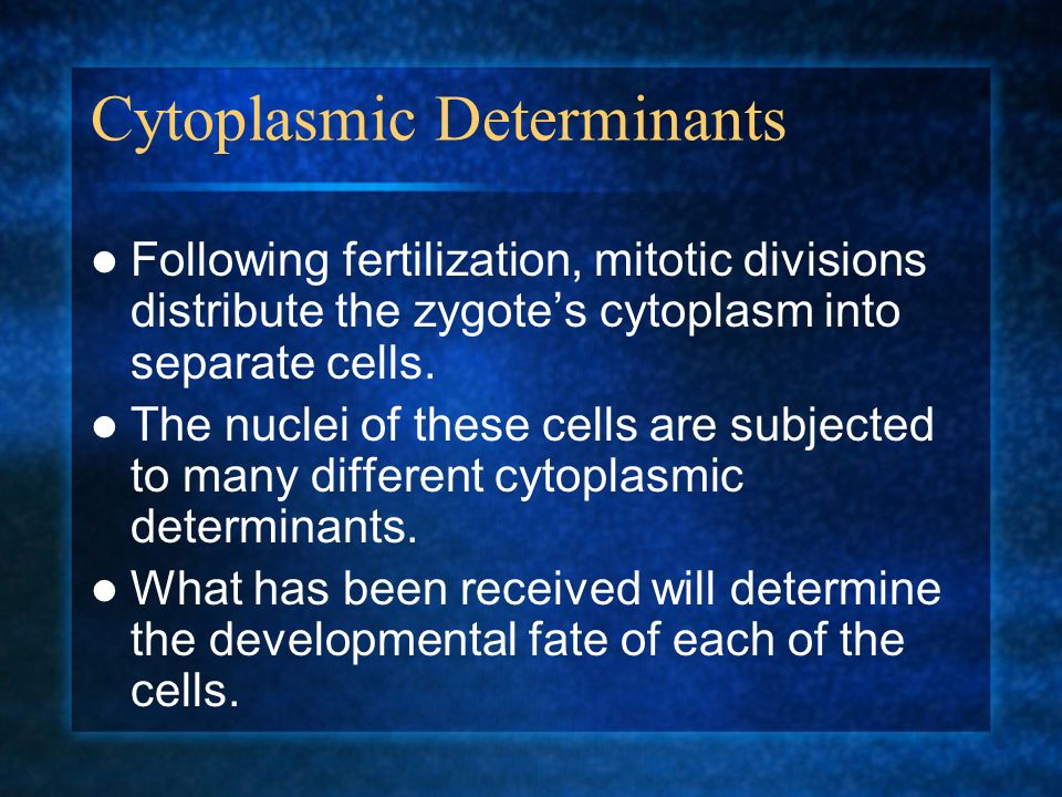 Cytoplasmic Determinants Following fertilization, mitotic divisions distribute the zygotes cytoplasm into separate cells. The nuclei of these cells ar