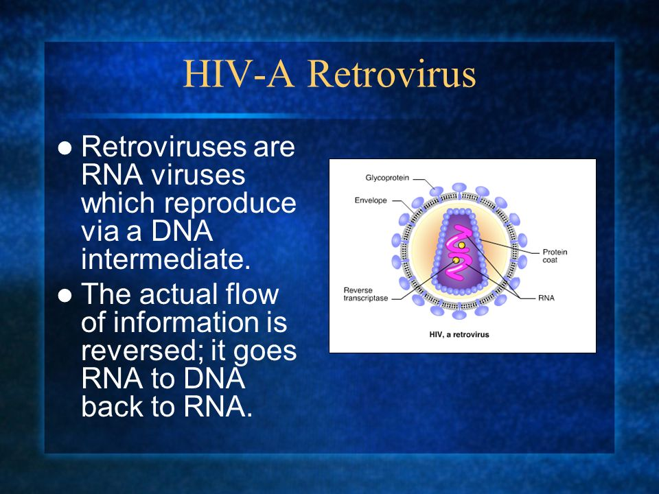 HIV-A Retrovirus Retroviruses are RNA viruses which reproduce via a DNA intermediate. The actual flow of information is reversed; it goes RNA to DNA b