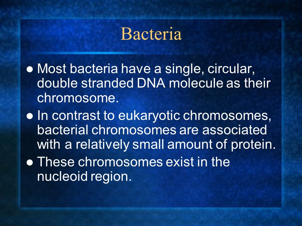 Bacteria Most bacteria have a single, circular, double stranded DNA molecule as their chromosome. In contrast to eukaryotic chromosomes, bacterial chr