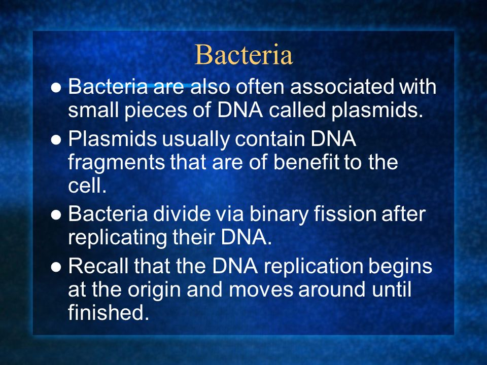 Bacteria Bacteria are also often associated with small pieces of DNA called plasmids. Plasmids usually contain DNA fragments that are of benefit to th